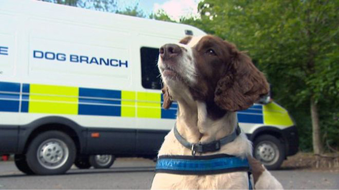 Police dog with dog branch van.