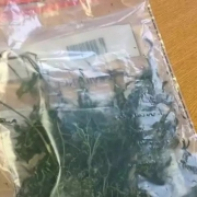Police evidence bag of the worst looking weed.