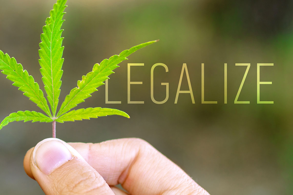 "Man holding cannabis leaf with caption ""legalize'."