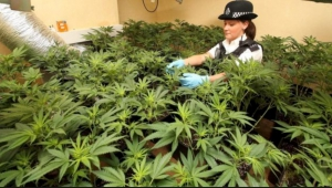 UK policewoman at a weed bust.