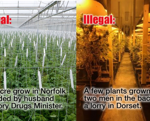 British Sugar's legal weed farm vs tiny grow in a lorry in Dorset.