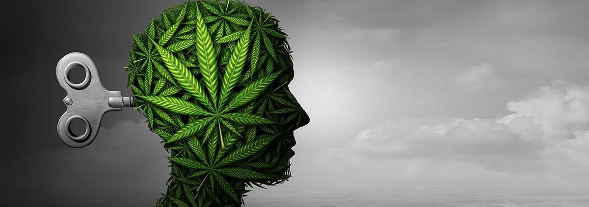 Cannabis does not cause psychosis.