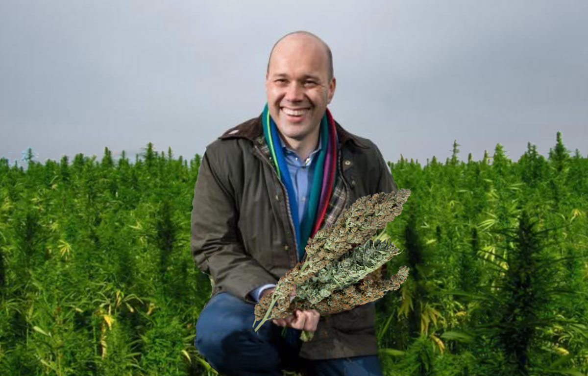 Paul Kenward, Managing Director of British Sugar, with his legal cannabis grow produced with a licence granted by the Home Office whose Drugs Minister happens to be married to him.