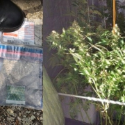Minor police cannabis raids.