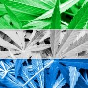 Sierra Leone Cannabis Flag