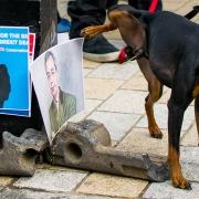 Dog urinating on photos of Boris Johnson and Nigel Farage