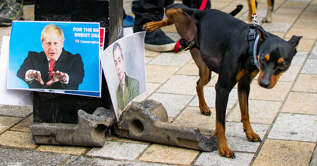 Dog urinating on photos of Boris Johnson and Nigel Farage