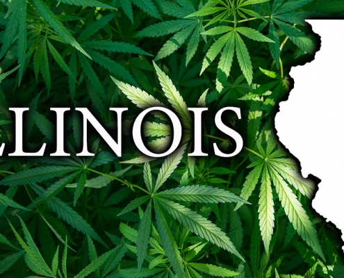 Cannabis leaves with a map of Illinois superimposed.