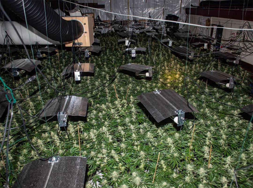 Photo of Kettering Bingo Hall cannabis farm.