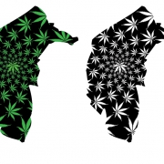 Graphic of map of the Australian Capital Territory with marijuana leaves imposed on the background.