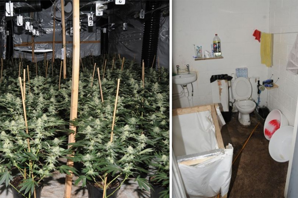 Vietnamese slave children forced to grow cannabis in the UK.