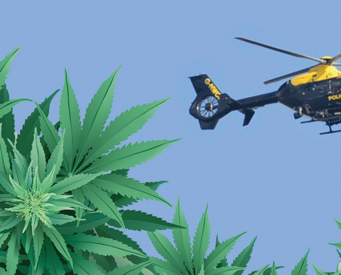 British police helicopter flying over cannabis leaves