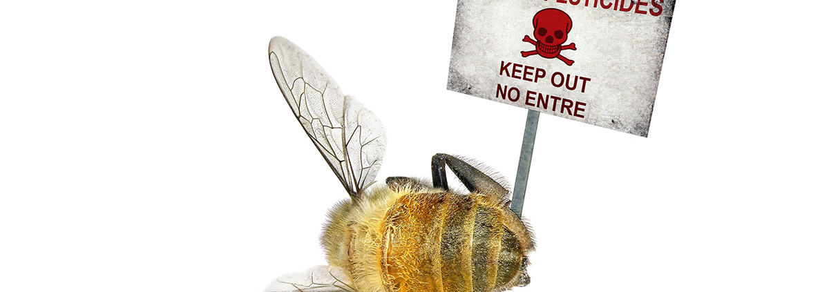 Dead bee near skull & bones sign saying: danger pesticides keep out no entre